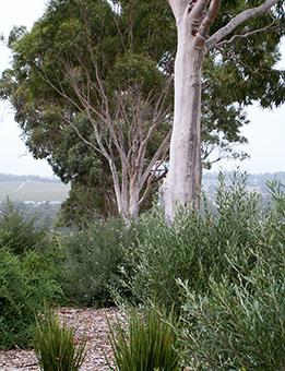 Tookoo Landscape Design - Landscape design in Adelaide ...